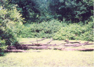 An experienced wetland scientist may be needed to identify this area as a wetland.